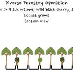 Permaculture Timber and Forestry animation 7