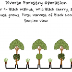 Permaculture Timber and Forestry animation 9