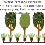 Permaculture Timber and Forestry animation 16