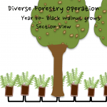 Permaculture Timber and Forestry animation 19
