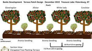 treasure lake tree planting terrace schematic permaculture