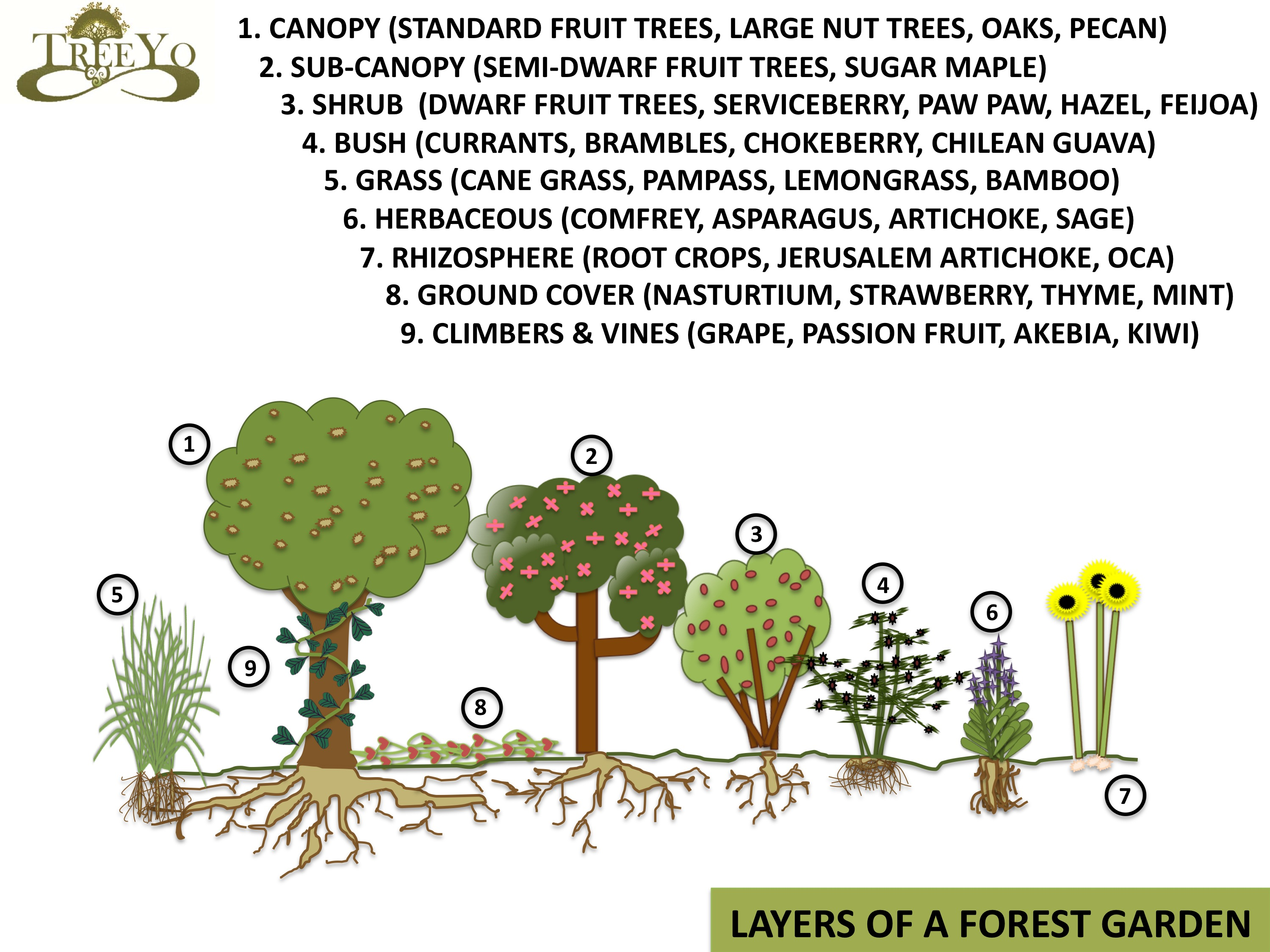 Food Forests Or Forest Gardens