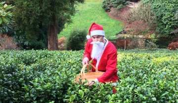 Father Christmas supports British grown tea