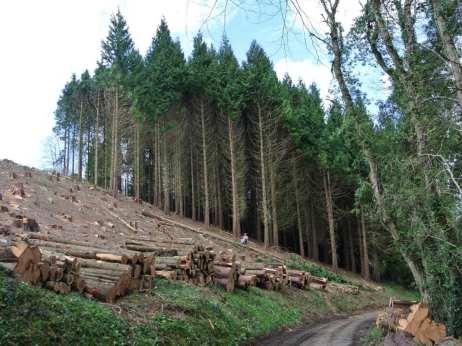 Tregothnan Forest Logging