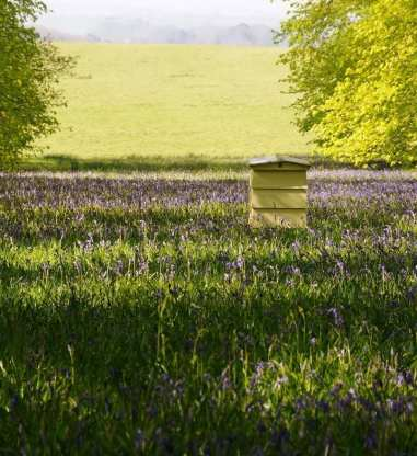 Hive in bluebell garden