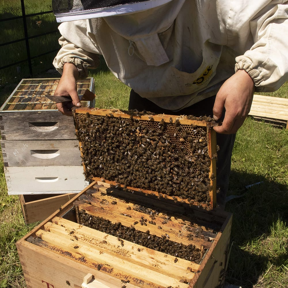 Bee Keeping Bees Honey Bee Keeper Hive Colony of Bees