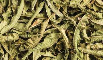 Lemon Verbena – 7g pouch