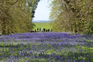 A field of Bluebells available to View at the Uk's Largest Garden open Weekend