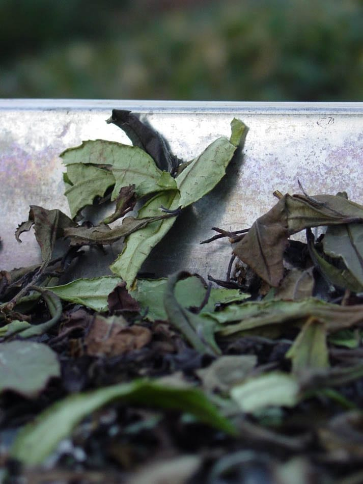 Oxidising leaves layed on a flat surface at a controlled temperature.