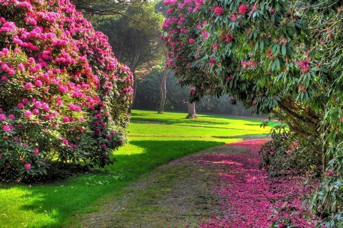 Tregothnan Gardens, Beautifully pink and green
