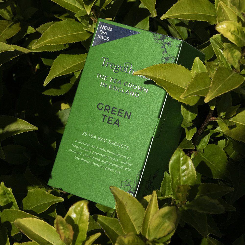 Green Tea 25 box in a Camellia sinensis bush