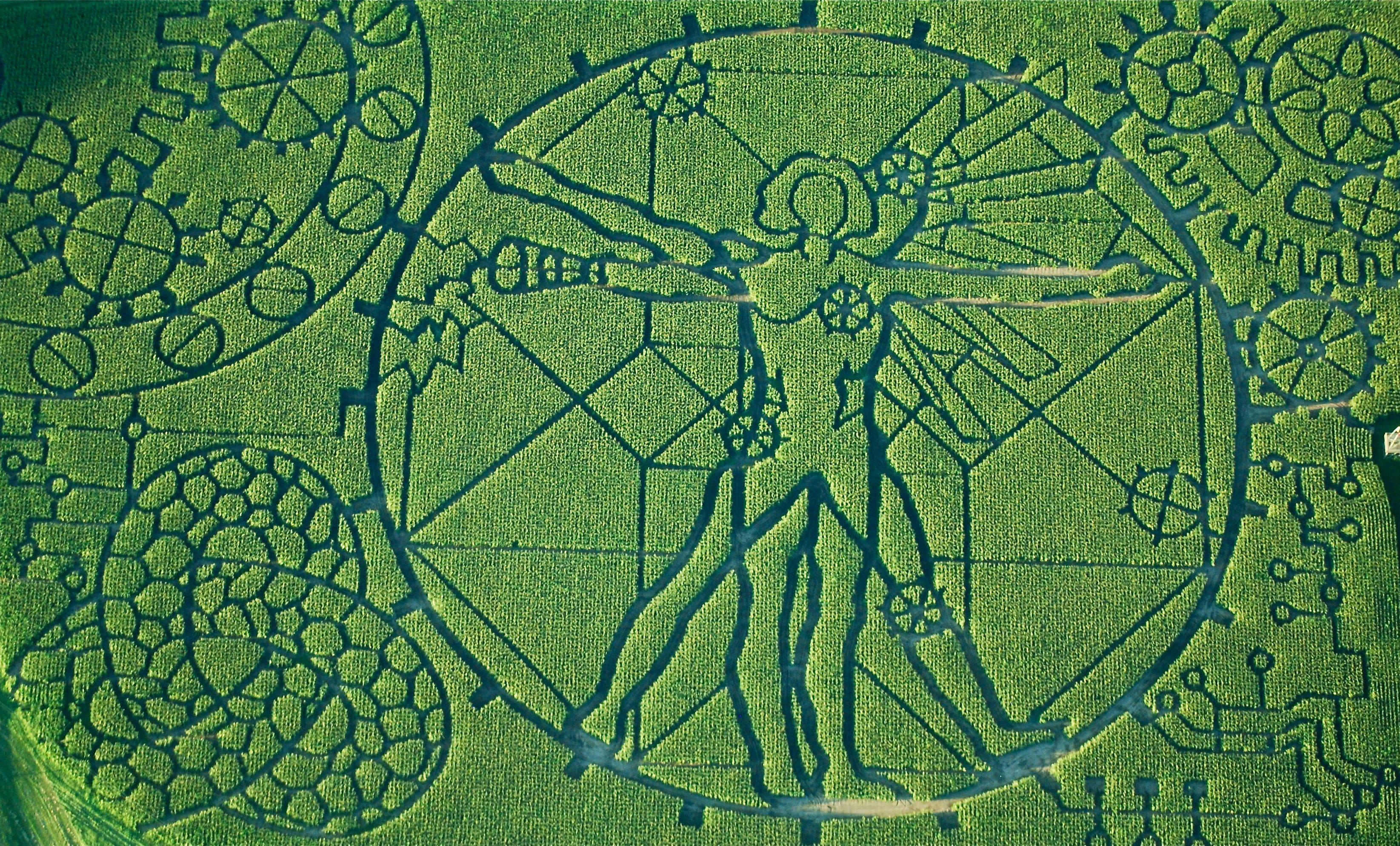 Corn Maze Craze Get Lost In Halloween Horror Fields