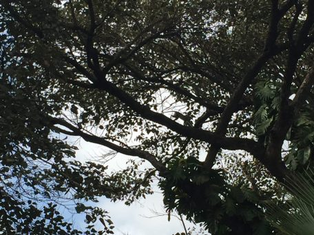 Monkeys in the trees