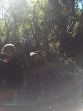 Day 2 - Lemosho Forest