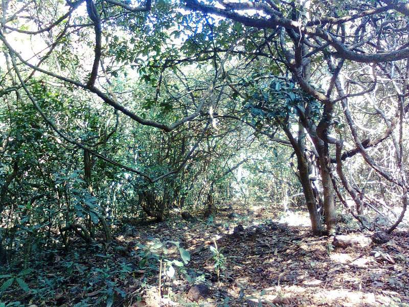 trails in dense forest of maharashtra