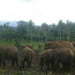 Pinnawela elephant orphanage – Srilanka