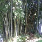 Botanical garden – Kandy