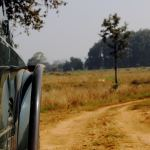 My first Jungle Safari – Kanha, MP
