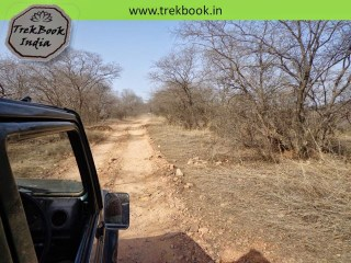 Mysterious jungle, Ranthambore, India