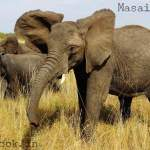 Lessons Learnt during Kenya Safari