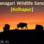 Radhanagari Wildlife Sanctuary Kolhapur