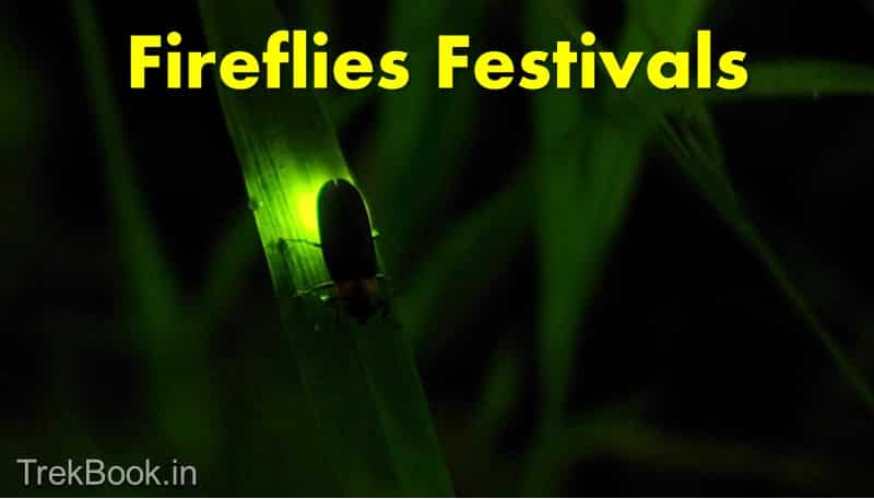 Fireflies Festival 2018 [Dates, Locations near Mumbai & Pune]