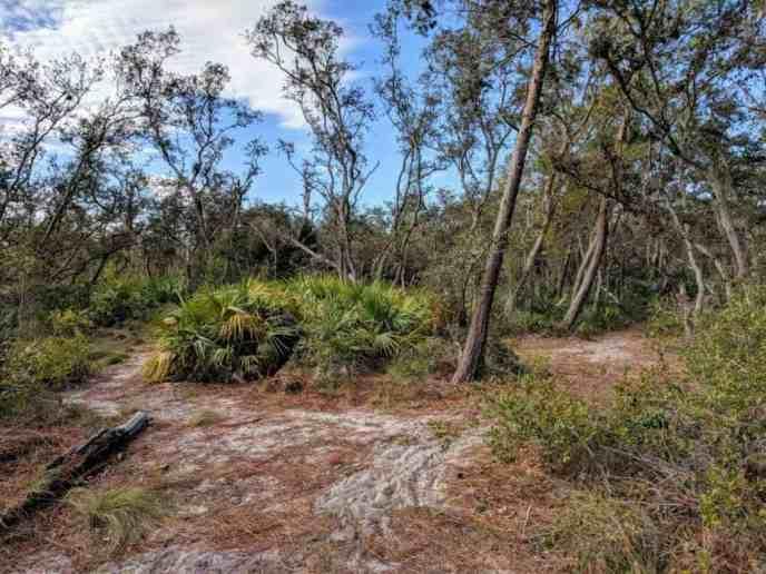 The trail system inside Wickham Park in Melbourne, FL