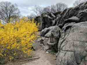 rocks and tree in Central Park