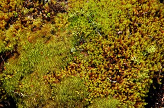 Various Mosses