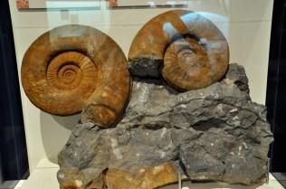 Ammonites, 200 Million years ago