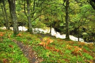 A roaring brook