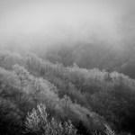 大川入山 初冬の草原に群れる羊に会いに中央アルプス最南端を登山