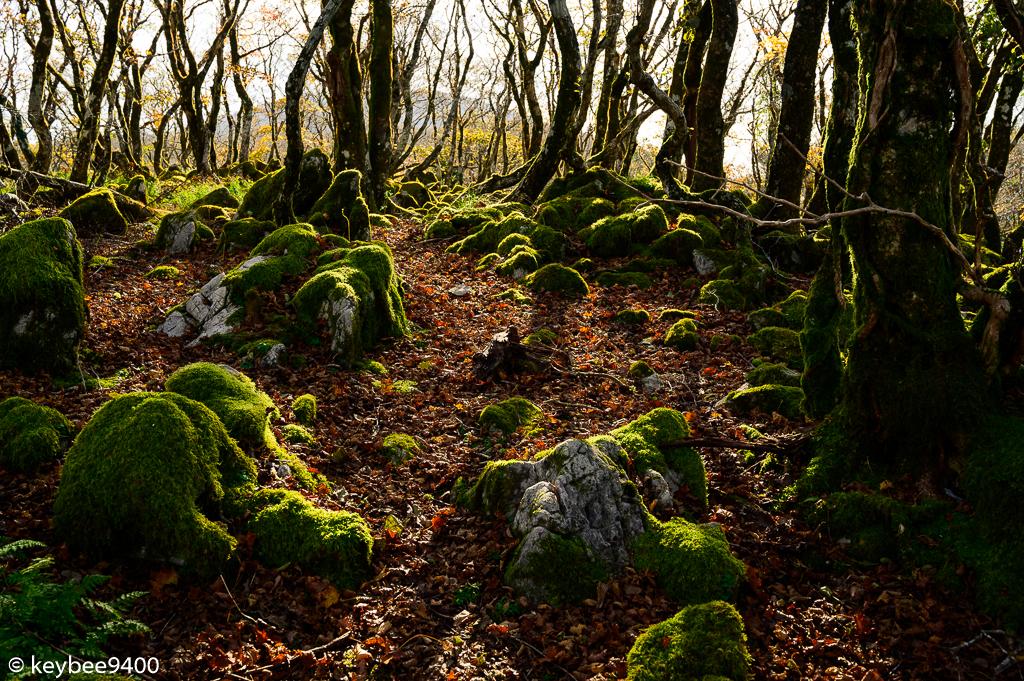 カレンフェルトの森
