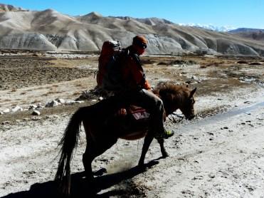 montando sobre caballos alo mustang