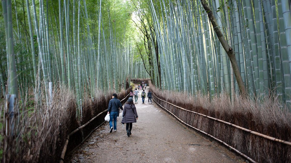 Bamboo forest of Arashiyama near Kyoto