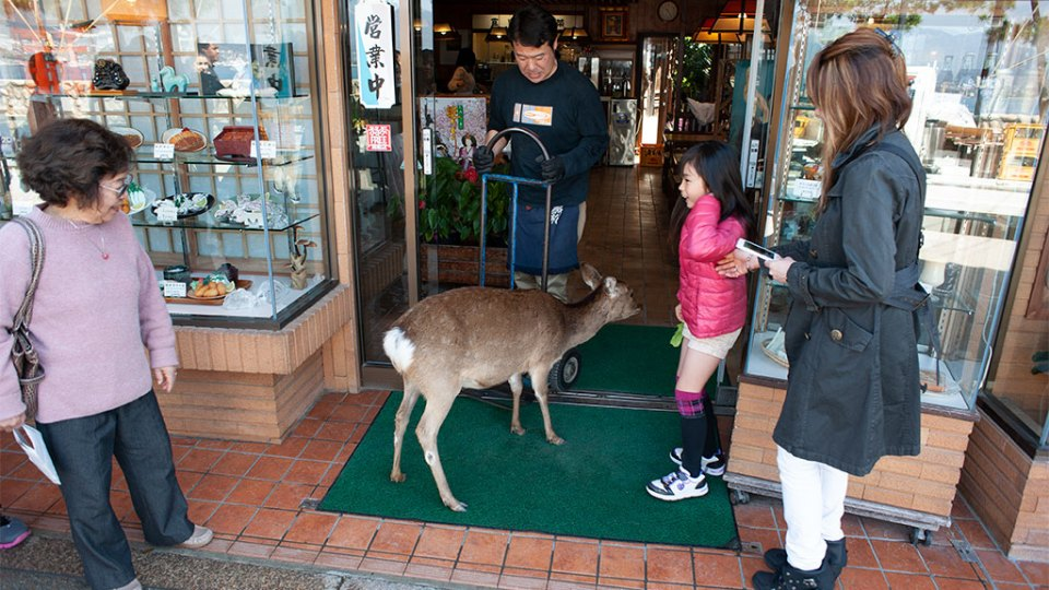 A deer entering a shop in Miyajima Island