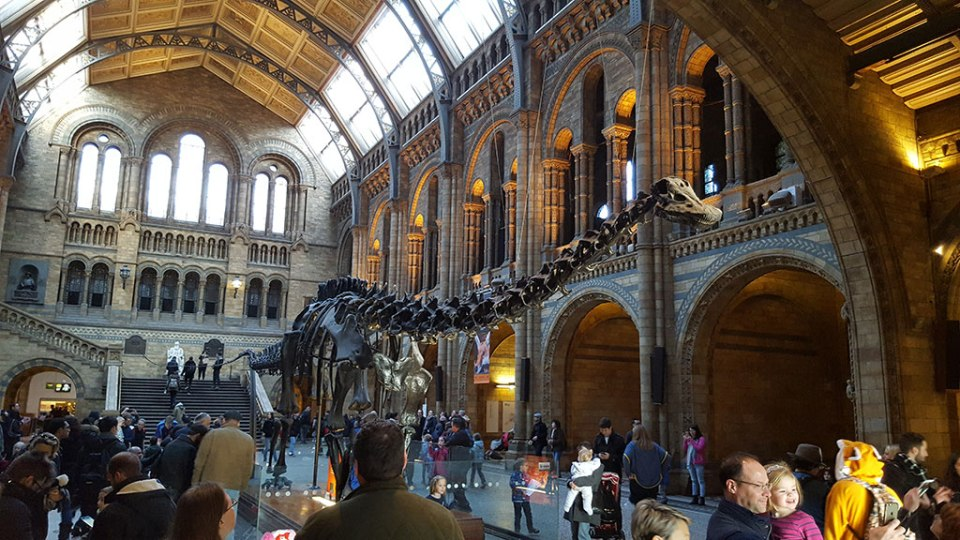 Dippy the diplodocus in London