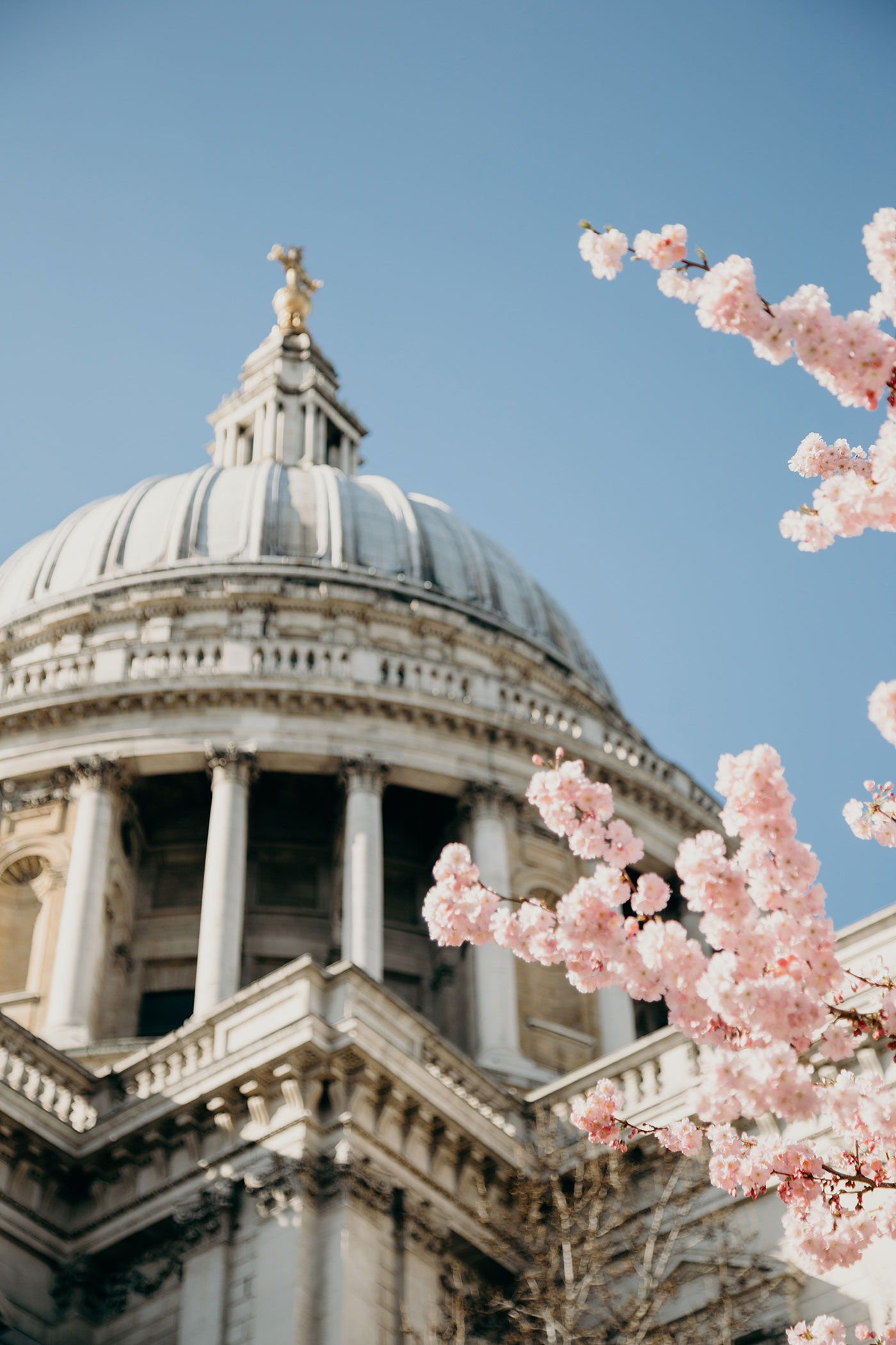 St Paul's Cathedral cherry blossoms