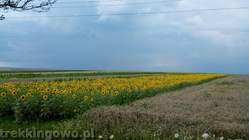 Rumunia, czy nadal dzika słoneczniki trekkingowo