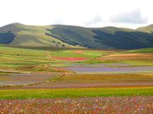 The plateau of Castelluccio