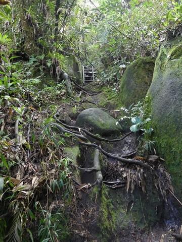 Escadas na Trilha
