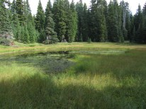 The pond. When I hiked this before there were hundred of dragonfly here. Not today.