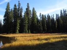 Meadow at lake edge.