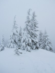 Snow covered trees on Ghost Ridge.