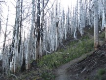 Bleach white trees left from the Dollar Lake Fire.