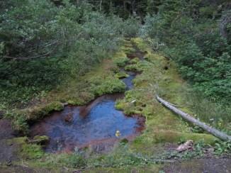 Spring fed creek near Newton Creek Camp site.