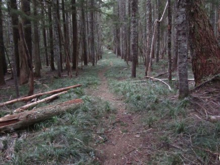 Straight section of trail heading to Benson Plateau.