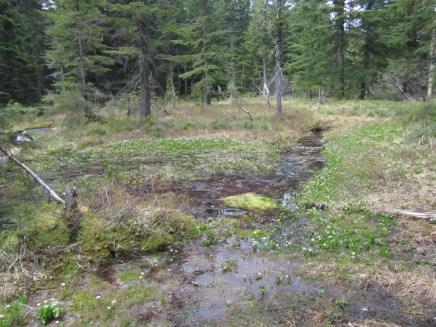 Spring feeding Ruckle Creek
