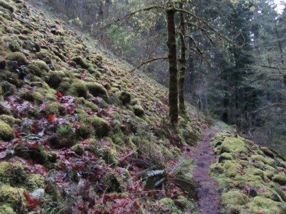 Trail passing through a mossy talus slope.