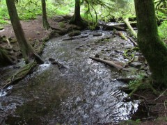 I love the way Wahkeena just comes out of the ground as a full creek.